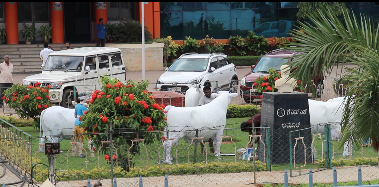 Cow sculpture before Nandini Dairy udergoing facelift in 2016. Curtesy Artist